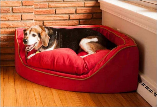 best washable dog bed