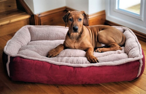 Featured Image of Dog Bed Benefits