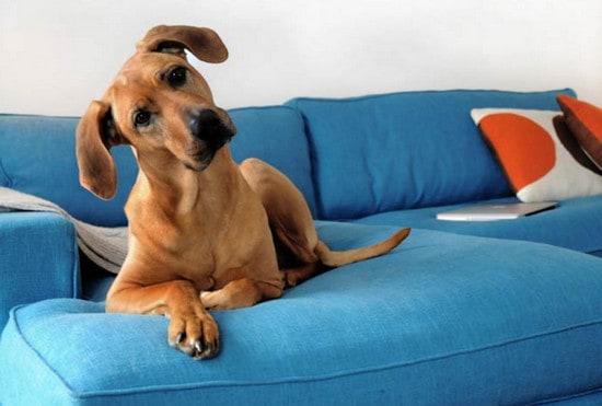 Keep Dog Off Furniture