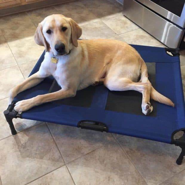 Best Heated Dog Bed Reviews