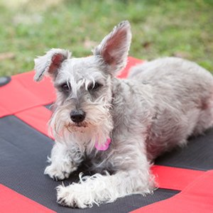 Rip Proof Indestructible Dog Beds
