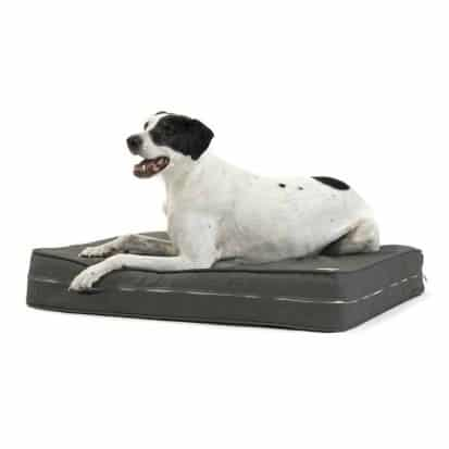 eLuxury Supply's Orthopedic Dog Bed Review