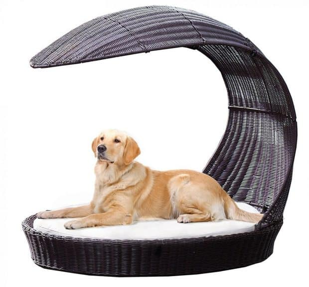 Outdoor Dog Chaise Bed n Espresso Review