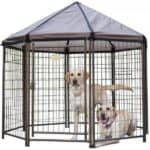 Advantek Pet Gazebo Modular Outdoor Dog Kennel