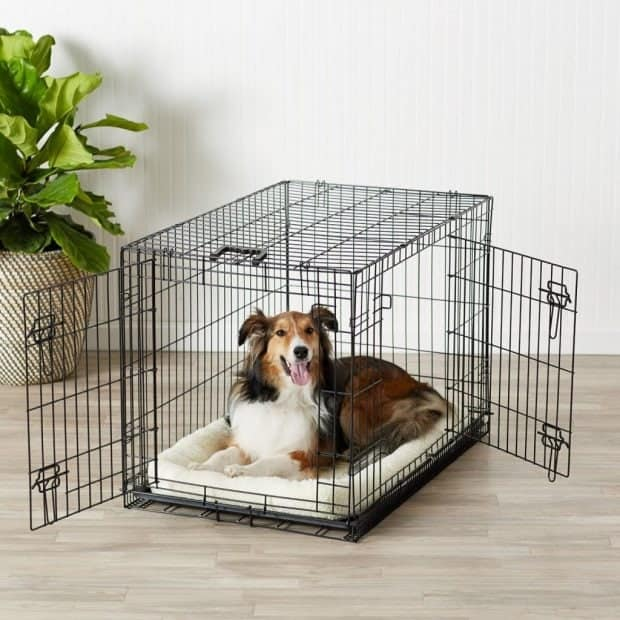 AmazonBasics Single & Double Door Dog Crate with Paw Protector Review