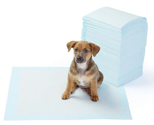 Amazon Basics Pet Training Pads