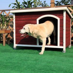 Petsfit Dog House Review