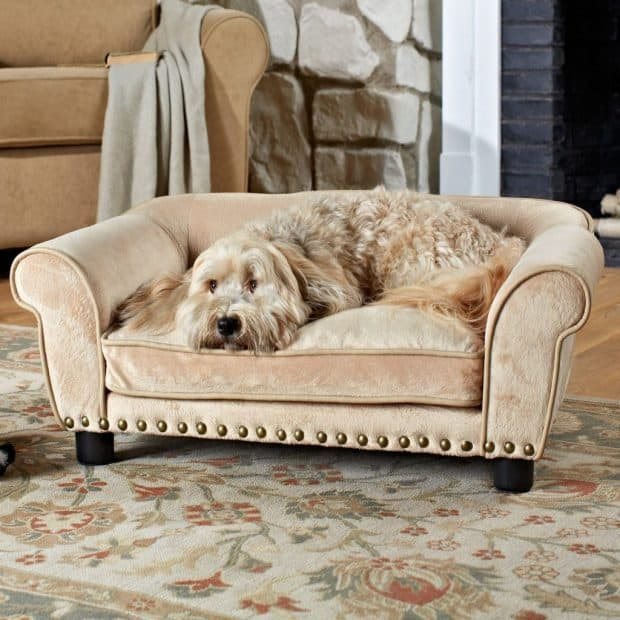 Wondrous Top 5 Best Dog Sofas And Chairs 2019 Reviews Buyers Guide Machost Co Dining Chair Design Ideas Machostcouk