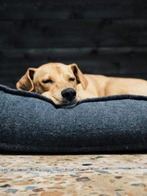 Best Dog Food For Sensitive Stomachs