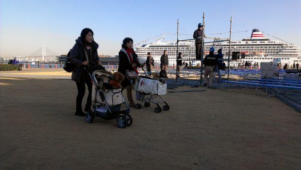 Jogging Dog Stroller