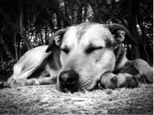 Park Dog