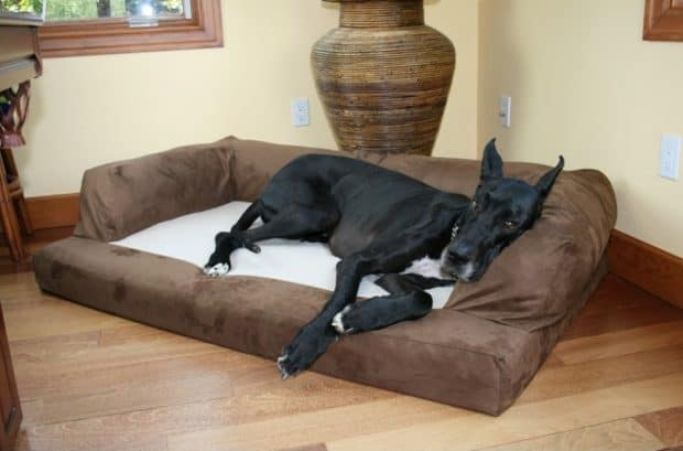 Top 5 Best Dog Bed For Great Danes 2019 Reviews Dog Bed Zone