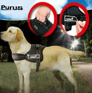 Pyrus K-8 No Pull Heavy Duty Harness