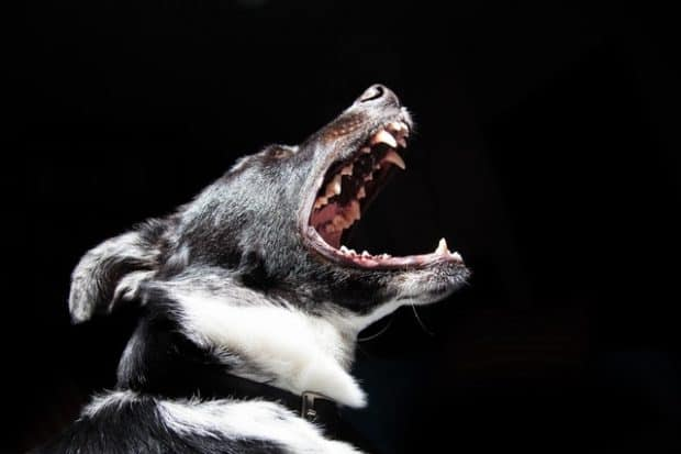 dog mouth open
