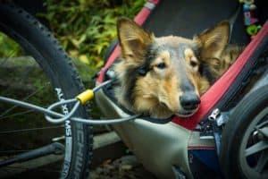 best dog bike trailers