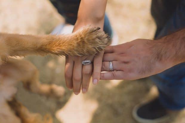 dog paw grooming