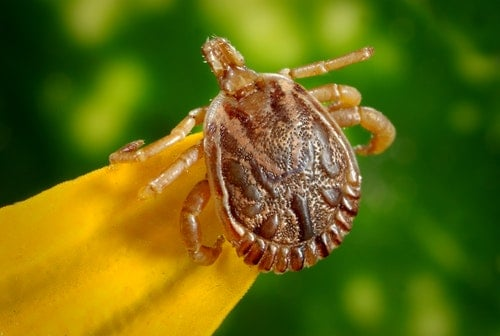 Does your dog have ticks
