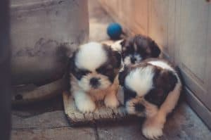 Puppies Need Flea Pills For Dogs Medication