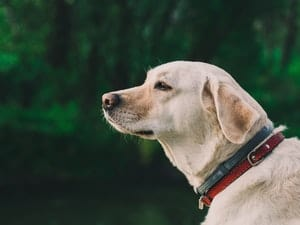 Dog looking out