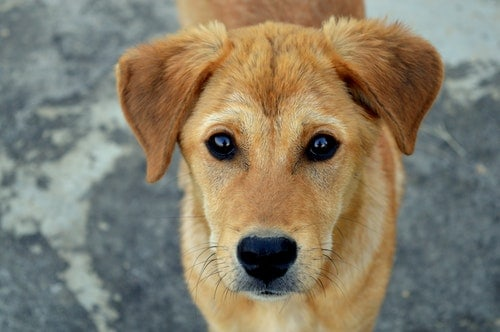 Flea Treatment For Dogs With Sensitive Skin