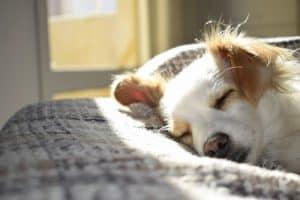 best bolster dog beds