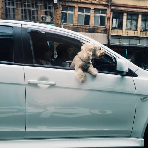Keeping Cars Clean with a Dog