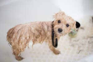 Dog Grooming Bath Tubs