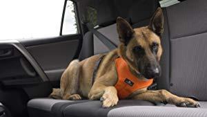 Sleepypod ClickIt Sport Crash-Tested Car Safety Dog Harness